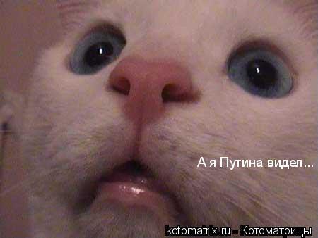 Котоматрица: А я Путина видел...