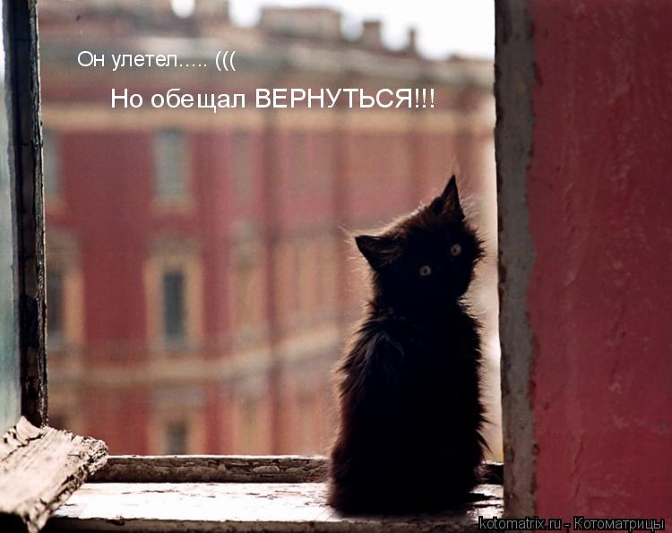 Котоматрица: Он улетел..... ((( Но обещал ВЕРНУТЬСЯ!!!