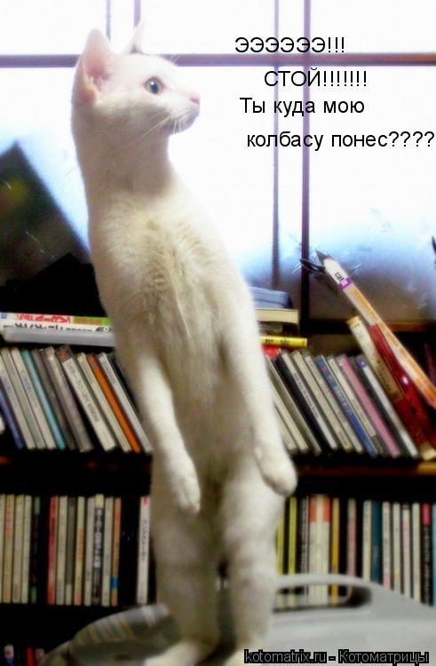 Котоматрица: ЭЭЭЭЭЭ!!! СТОЙ!!!!!!! Ты куда мою колбасу понес????