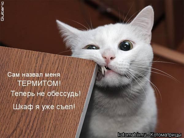Котоматрица: Сам назвал меня ТЕРМИТОМ! Теперь не обессудь! Шкаф я уже съел!
