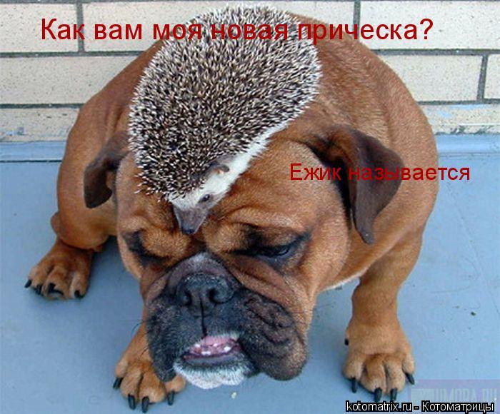 http://kotomatrix.ru/images/lolz/2008/02/20/p.jpg