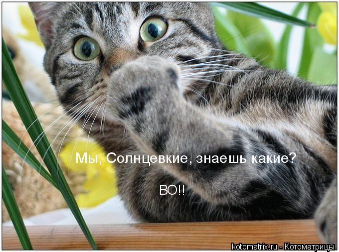 Котоматрица: Мы, Солнцевские, знаешь какие? ВО!!
