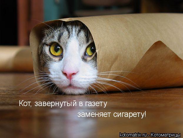 Котоматрица: Кот, завернутый в газету заменяет сигарету!