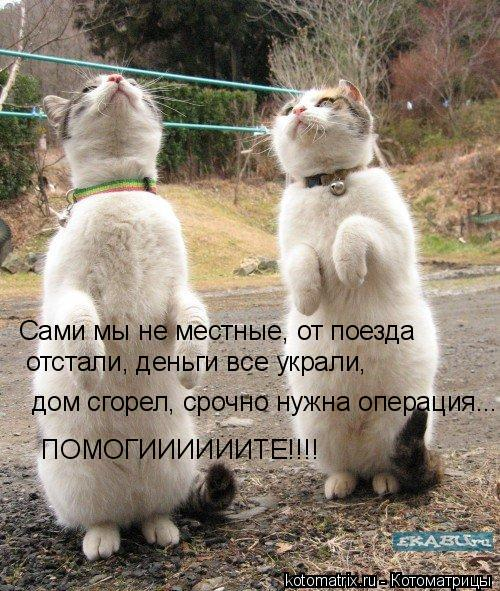http://kotomatrix.ru/images/lolz/2008/02/21/l3.jpg
