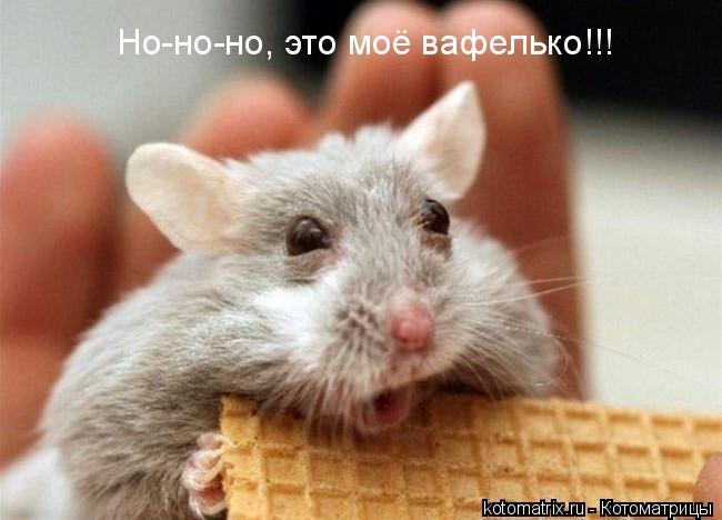 Котоматрица: Но-но-но, это моё вафелько!!!
