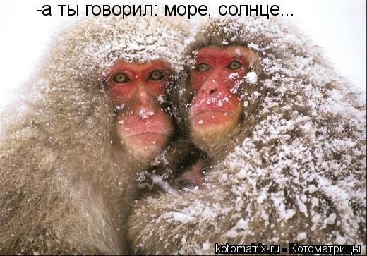 http://kotomatrix.ru/images/lolz/2008/02/22/v.jpg