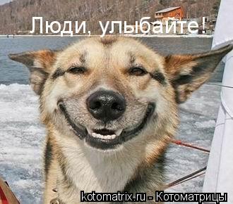 Котоматрица: