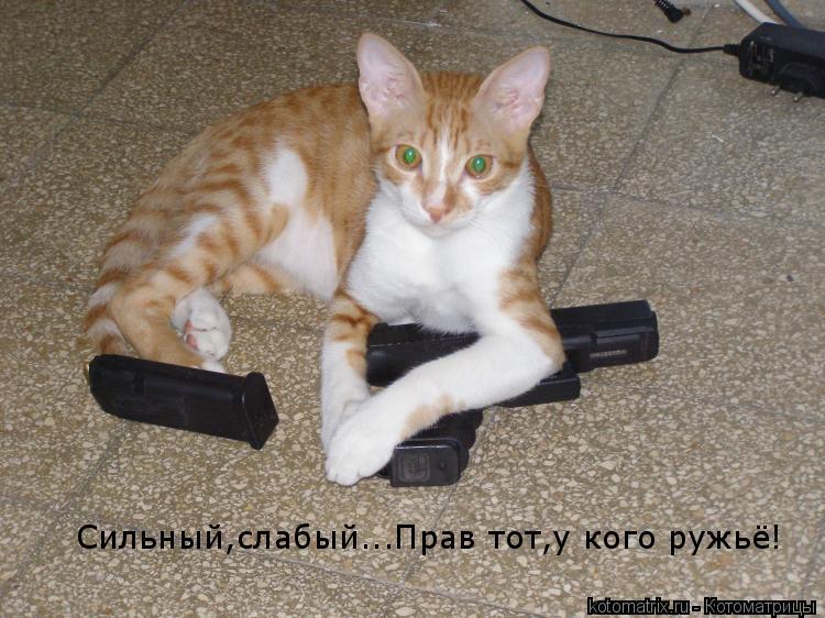 Котоматрица: Сильный, слабый...Прва тот, у кого ружьё!