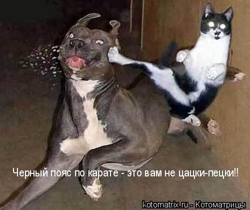 http://kotomatrix.ru/images/lolz/2008/02/27/5.jpg