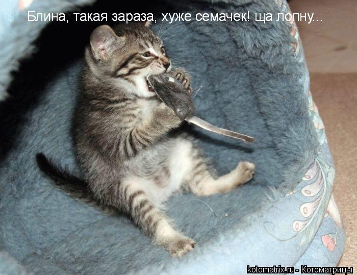 http://kotomatrix.ru/images/lolz/2008/02/28/a.jpg