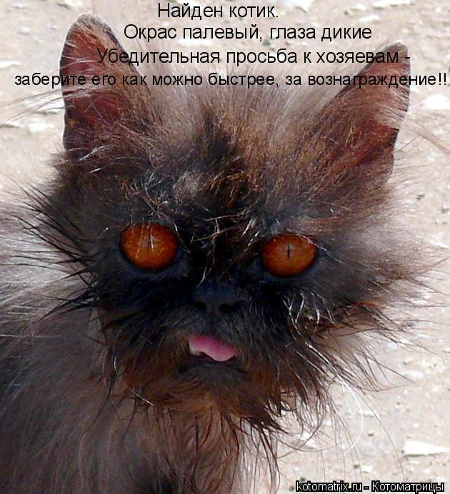 Котоматрица: Найден котик. Окрас палевый, глаза дикие Убедительная просьба к хозяевам - заберите его как можно быстрее, за вознаграждение!!