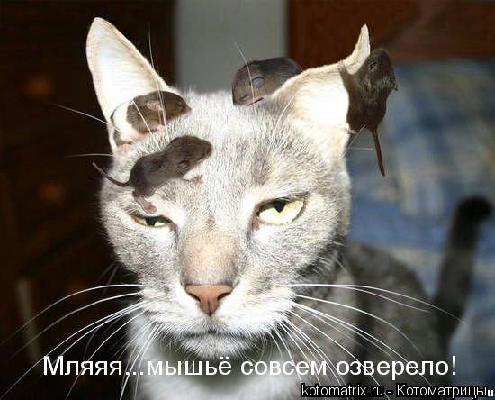 Котоматрица: Мляяя...мышье совсем озверело!