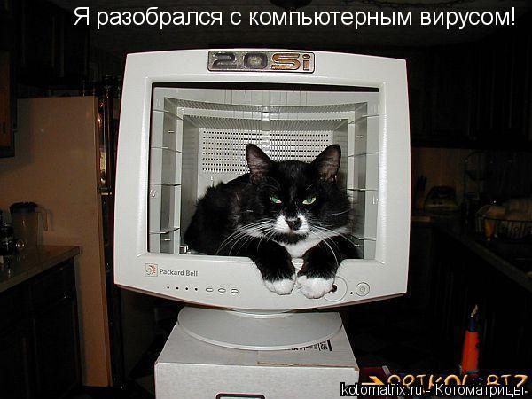 Котоматрица: Я разобрался с компьютерным вирусом!
