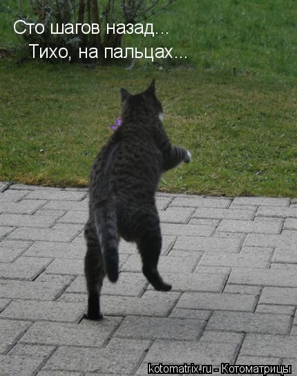 Котоматрица: Сто шагов назад тихо на пальцах...