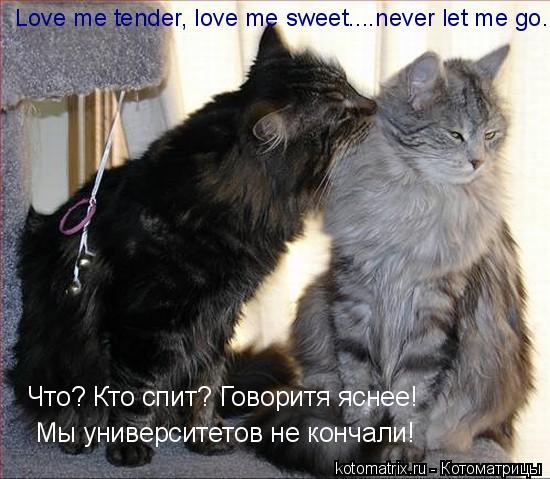 Котоматрица: Love me tender, love me sweet... Что? Кто спит? Говоритя яснее! Мы университетов не кончали!