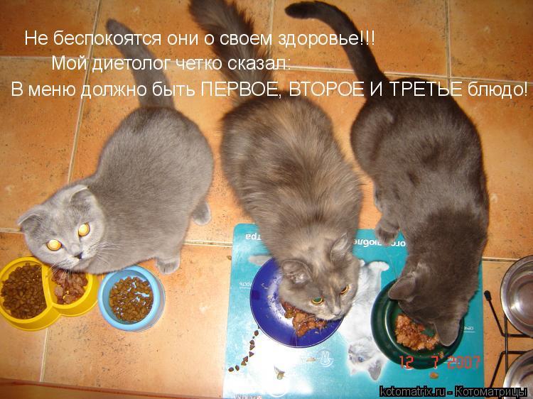 Котоматрица: Не беспокоятся они о своем здоровье...Мне мой диетолог четко сказал: В меню должно быть первое, второе и третье блюдо!
