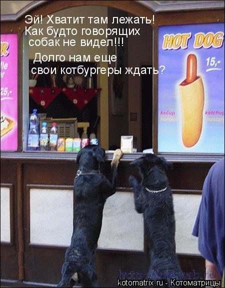 Котоматрица: Эй, хватит там лежать, как будто говорящих собак не видел! Долго нам еще свои котбургеры ждать?