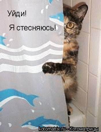 Котоматрица: Уйди, я стесняюсь!