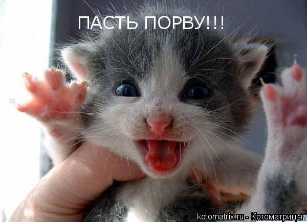 http://kotomatrix.ru/images/lolz/2008/03/31/J-.jpg