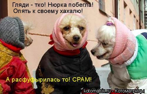 http://kotomatrix.ru/images/lolz/2008/04/03/FL.jpg
