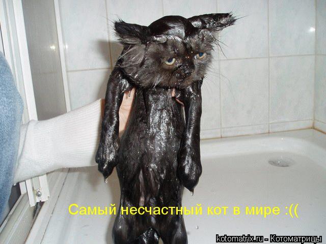 Котоматрица: Самый несчастный кот в мире :((