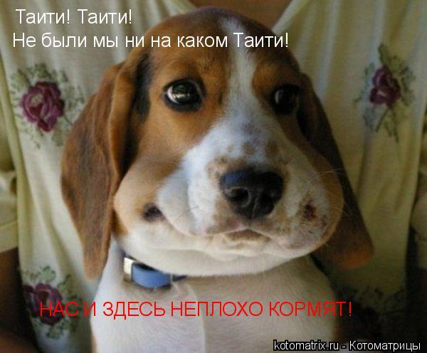 Котоматрица: Таити! Таити! Не были мы ни на каком Таити!
