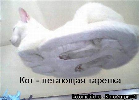 Котоматрица: Кот - летающая тарелка