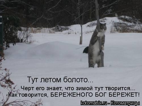 Котоматрица: Тут летом болото... черт его знает, что зимой