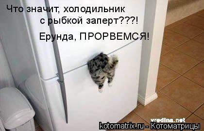 Котоматрица: Что значит, холодильник с рыбкой заперт???! Ерунда, ПРОРВЕМСЯ!