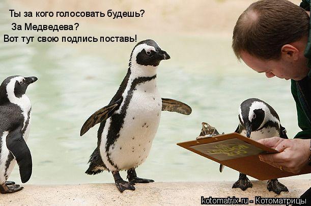 Котоматрица: Ты за кого голосовать будешь? За Медведева?