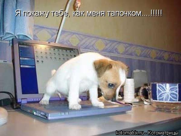 http://kotomatrix.ru/images/lolz/2008/04/17/fj.jpg