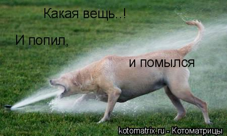 http://kotomatrix.ru/images/lolz/2008/04/18/dh.jpg