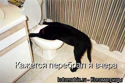 http://kotomatrix.ru/images/lolz/2008/04/18/mL.jpg
