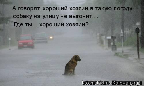 Котоматрица: А говорят, хороший хозяин в такую погоду собаку на улицу не выгонит...