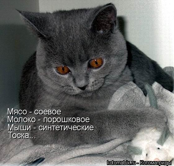 """,""kotomatrix.ru"