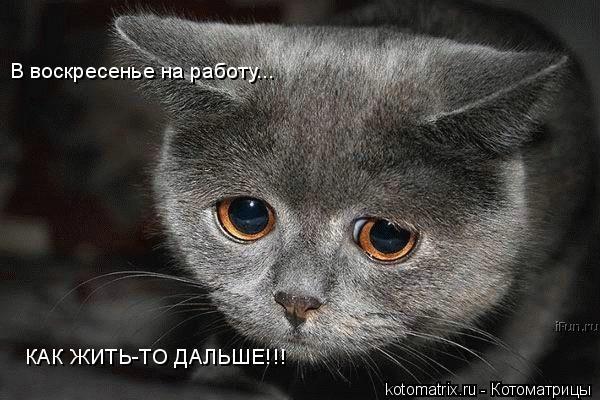 http://kotomatrix.ru/images/lolz/2008/05/01/l.jpg