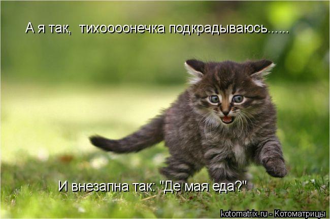 Котоматриця!)))) - Страница 4 Xd