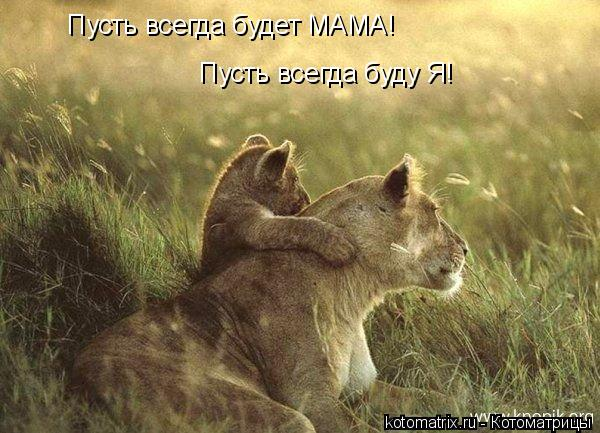 Котоматрица: Пусть всегда будет МАМА! Пусть всегда буду Я!