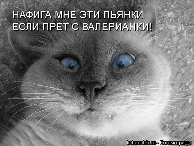 http://kotomatrix.ru/images/lolz/2008/05/13/cm.jpg