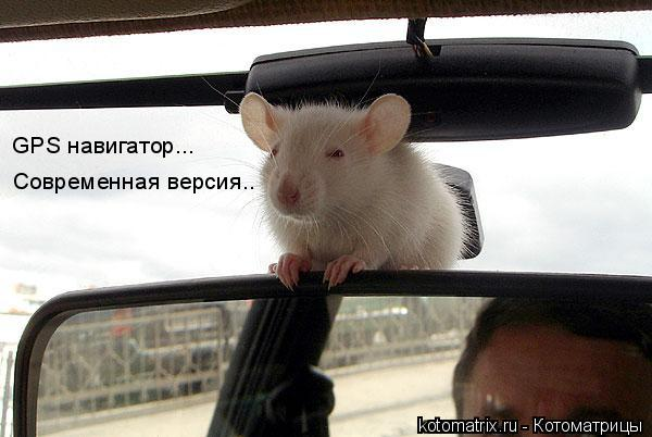 Котоматрица: GPS навигатор... Современная версия...
