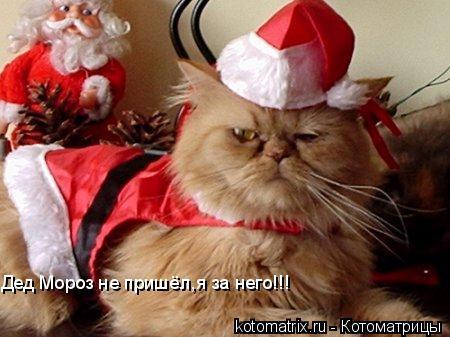 Котоматрица: Дед Мороз не пришёл,я за него!!!
