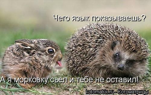 Котоматрица: Чего язык показываешь? А я морковку сьел и тебе не оставил!