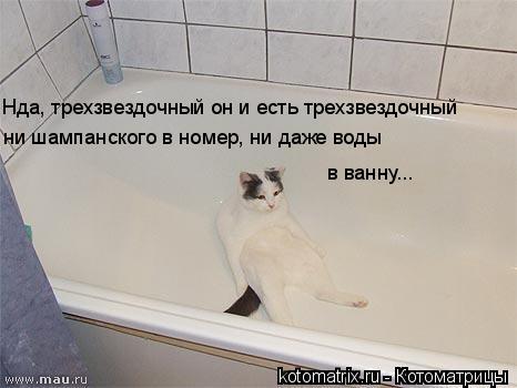 Котоматрица: Нда, трехзвездочный он и есть трехзвездочный ни шампанского в номер, ни даже воды в ванну...
