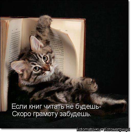 Котоматрица: Если книг читать не будешь- Скоро грамоту забудешь.