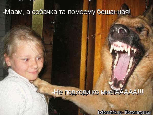 Котоматрица: -Не подходи ко мне!ААААА!!! -Не подходи ко мне!ААААА!!! -Маам, а собачка та помоему бешанная! -Маам, а собачка та помоему бешанная!