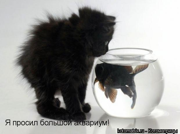 Котоматрица: Я просил большой аквариум!