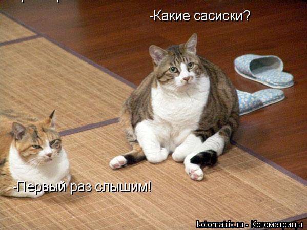 Котоматрица: -Какие сасиски? -Какие сасиски? -Первый раз слышим! -Первый раз слышим!