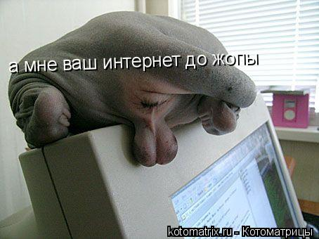 Котоматрица: а мне ваш интернет до жопы