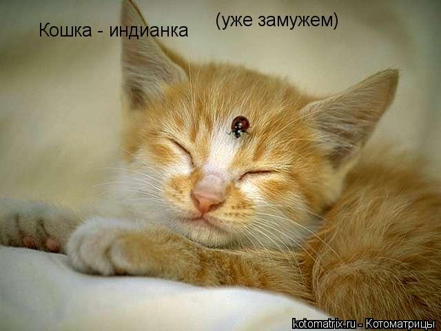 Котоматрица: Кошка - индианка  (уже замужем)