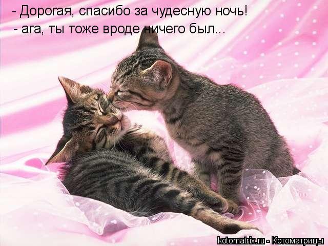 Котоматрица: - Дорогая, спасибо за чудесную ночь! - ага, ты тоже вроде ничего был...